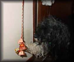 Rags ringing the bell with his paw