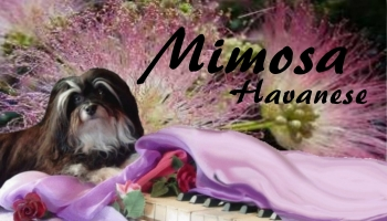 mimosa kennel card