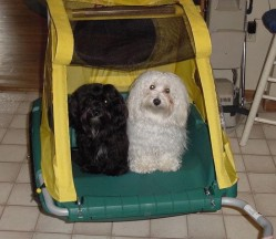 Ollie and Gypsy in their puppy cart